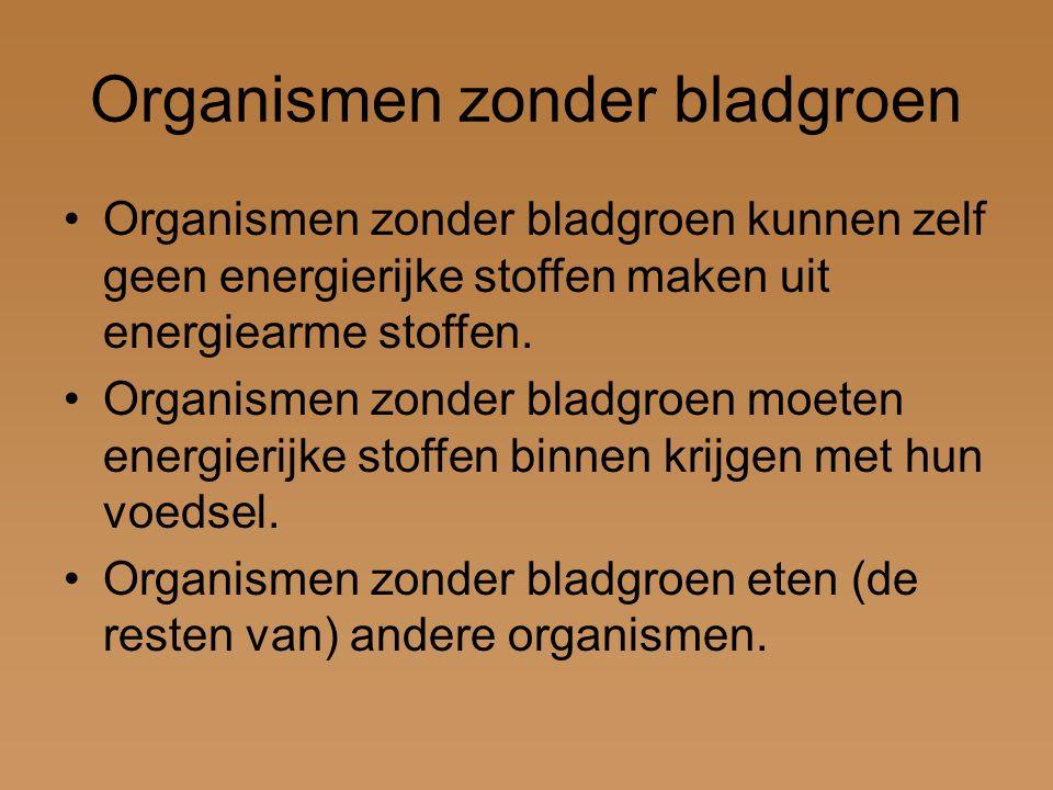 Organismen zonder bladgroen Organismen zonder bladgroen kunnen zelf geen energierijke stoffen maken uit energiearme stoffen.