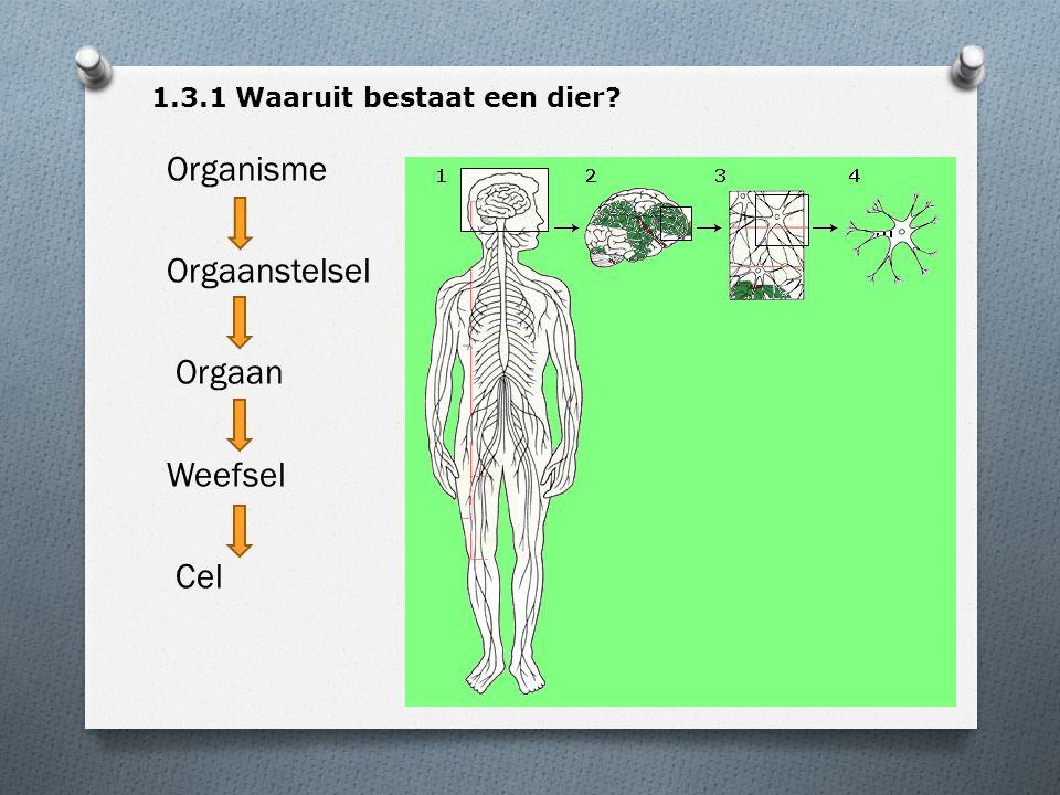 Organisme Orgaanstelsel Orgaan Weefsel Cel 1.3.1 Waaruit bestaat een dier?