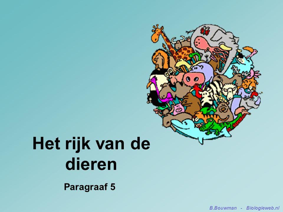 Het rijk van de dieren Paragraaf 5 B.Bouwman - Biologieweb.nl