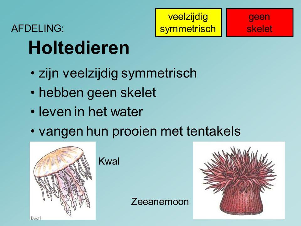 Holtedieren AFDELING: Zeeanemoon Kwal geen skelet veelzijdig symmetrisch zijn veelzijdig symmetrisch hebben geen skelet leven in het water vangen hun