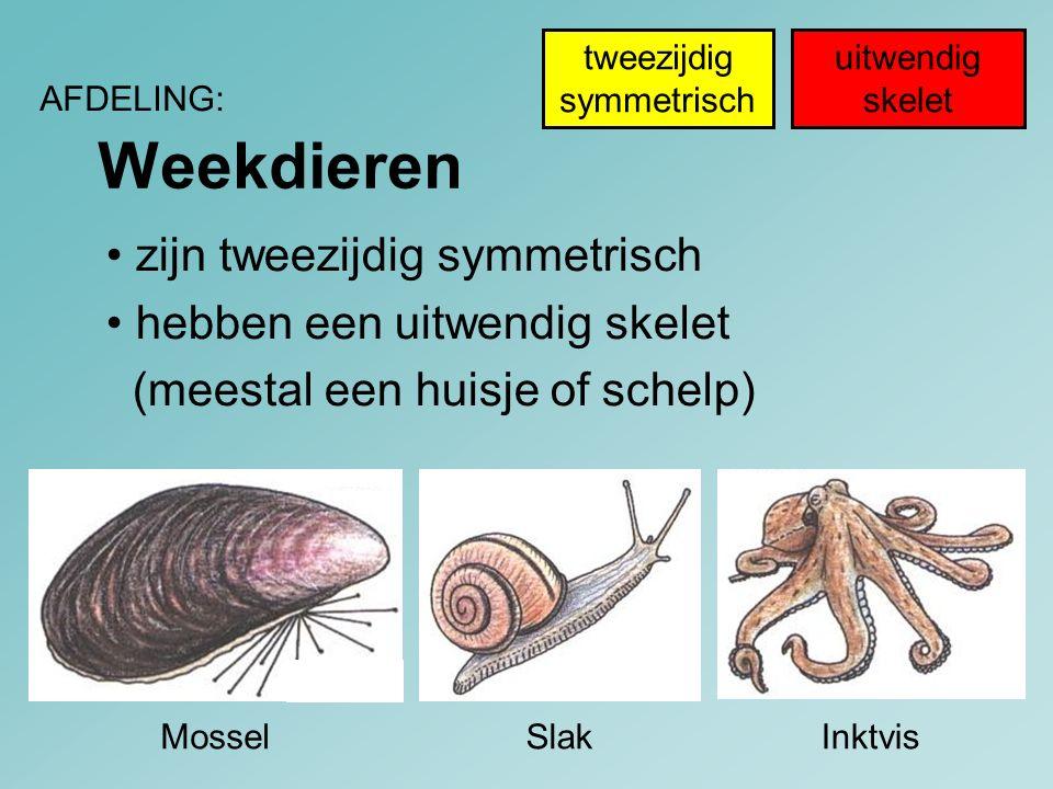 Weekdieren AFDELING: InktvisMosselSlak uitwendig skelet tweezijdig symmetrisch zijn tweezijdig symmetrisch hebben een uitwendig skelet (meestal een hu