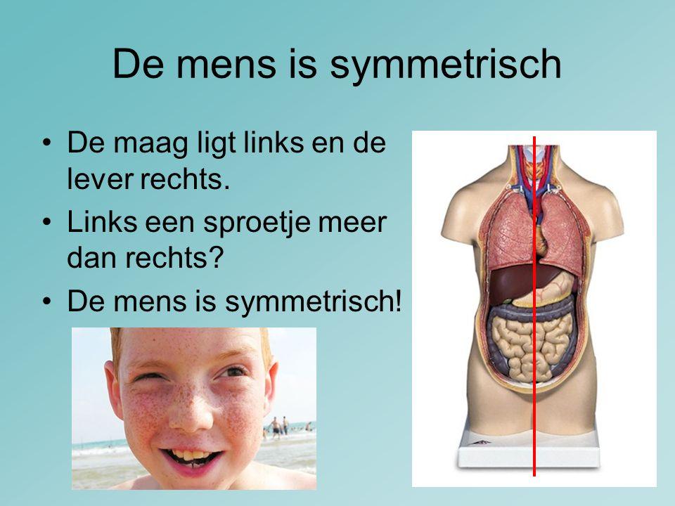 De mens is symmetrisch De maag ligt links en de lever rechts. Links een sproetje meer dan rechts? De mens is symmetrisch!