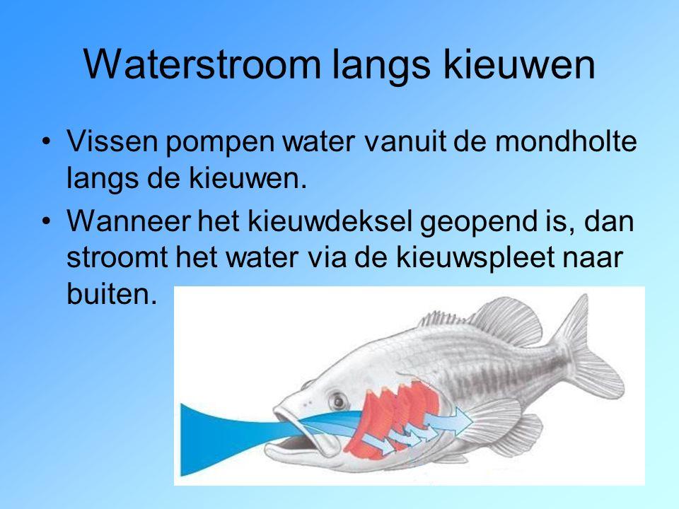 Bek open en kieuwdeksels dicht:  Water stroomt in de mondholte. 1 ste kieuwboogkieuwdeksel