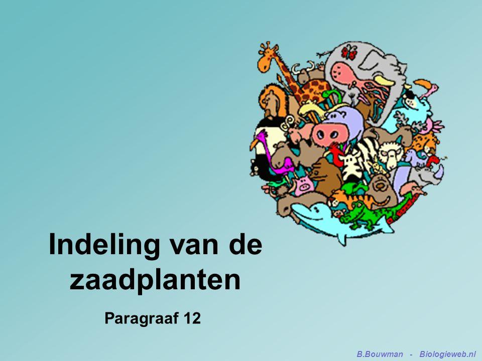 Indeling van de zaadplanten Paragraaf 12 B.Bouwman - Biologieweb.nl
