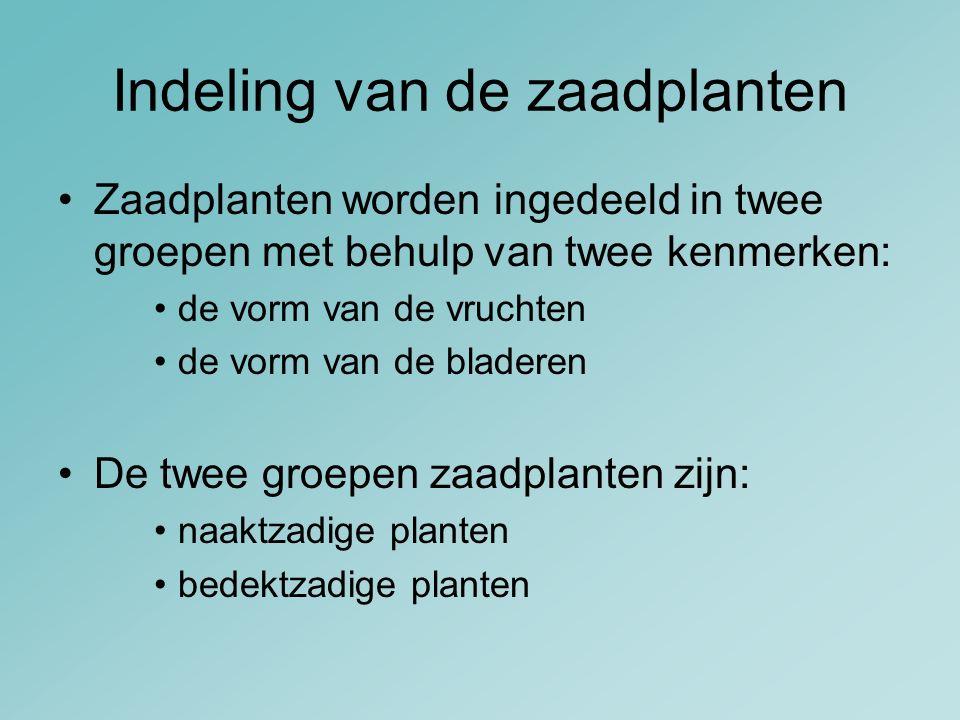 Indeling van de zaadplanten Zaadplanten worden ingedeeld in twee groepen met behulp van twee kenmerken: de vorm van de vruchten de vorm van de bladere