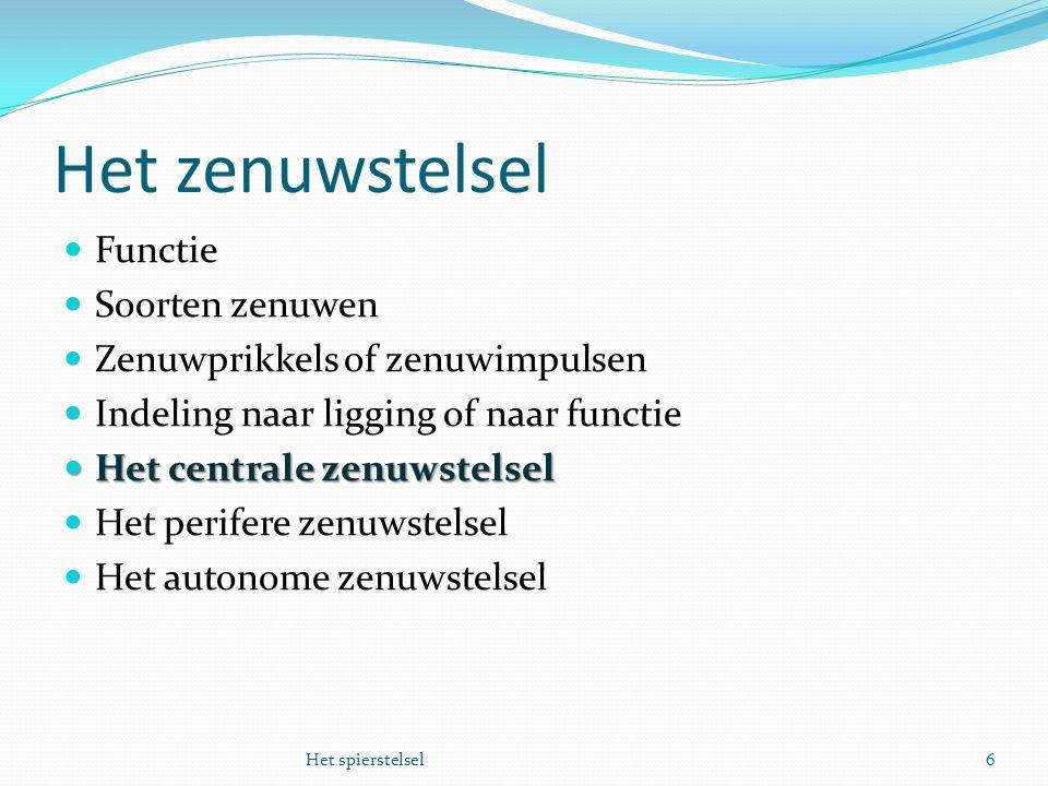 Het zenuwstelsel Functie Soorten zenuwen Zenuwprikkels of zenuwimpulsen Indeling naar ligging of naar functie Het centrale zenuwstelsel Het centrale z