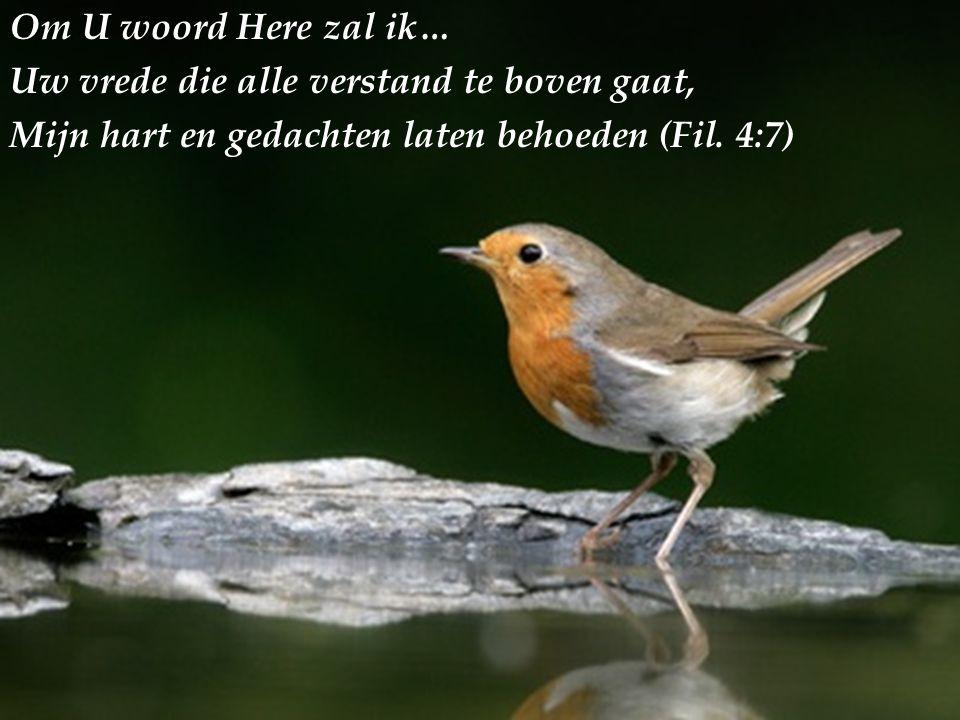 Om U woord Here zal ik… Uw vrede die alle verstand te boven gaat, Mijn hart en gedachten laten behoeden (Fil.