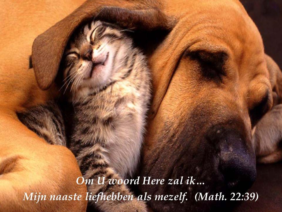 Om U woord Here zal ik… Mijn vijanden liefhebben En bidden voor wie mij vervolgen (Math. 5:44)