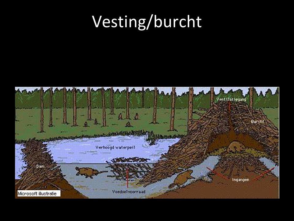 Vesting/burcht
