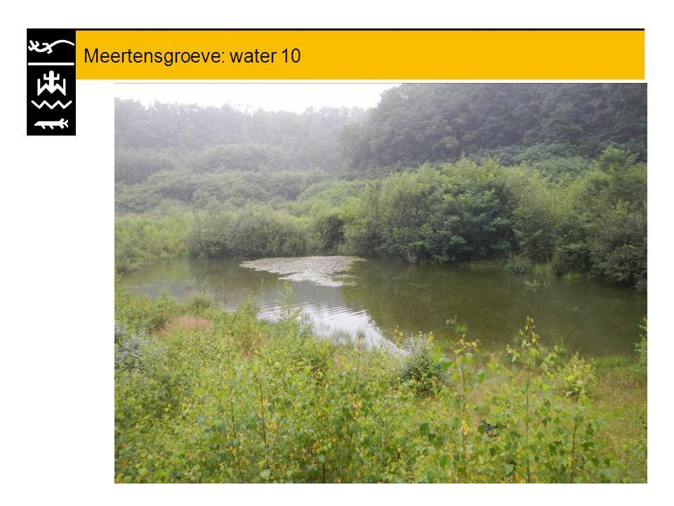 Meertensgroeve: water 10