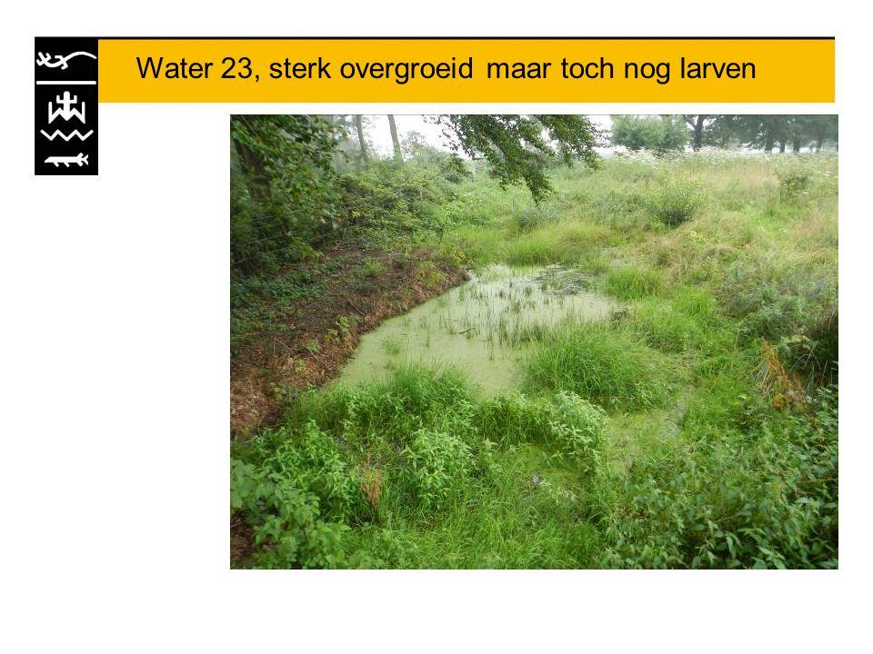 Water 23, sterk overgroeid maar toch nog larven