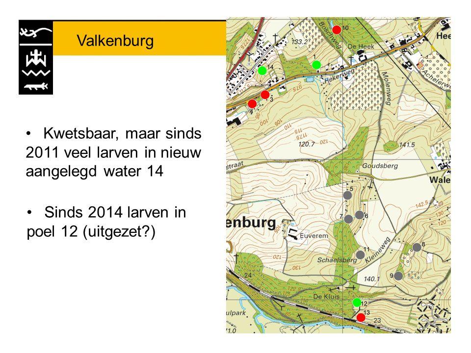Valkenburg Kwetsbaar, maar sinds 2011 veel larven in nieuw aangelegd water 14 Sinds 2014 larven in poel 12 (uitgezet?)