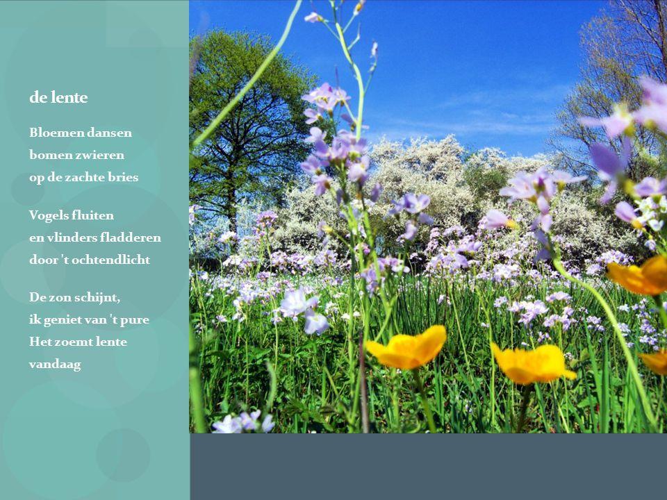 de lente Bloemen dansen bomen zwieren op de zachte bries Vogels fluiten en vlinders fladderen door t ochtendlicht De zon schijnt, ik geniet van t pure Het zoemt lente vandaag
