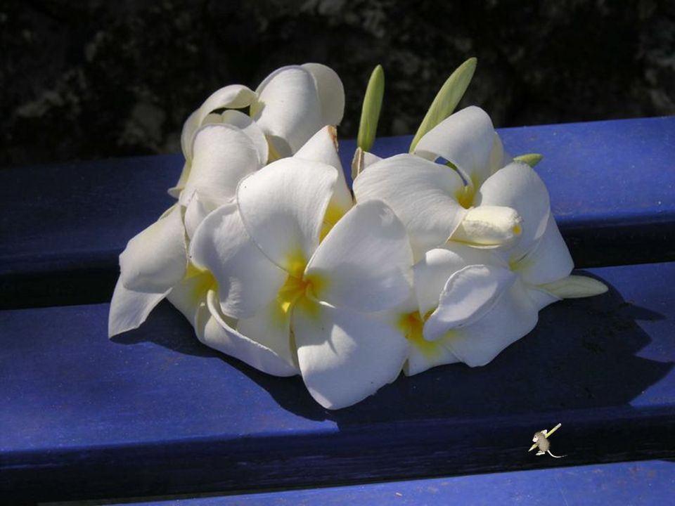 Want al wat schoonheid is, met simpelheid begint… en 'k noem liefde, 't zaad van alle schoonheids bloemen.