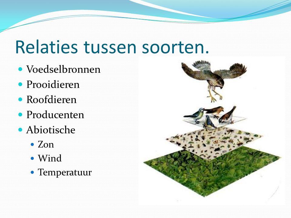 Relaties tussen soorten. Voedselbronnen Prooidieren Roofdieren Producenten Abiotische Zon Wind Temperatuur