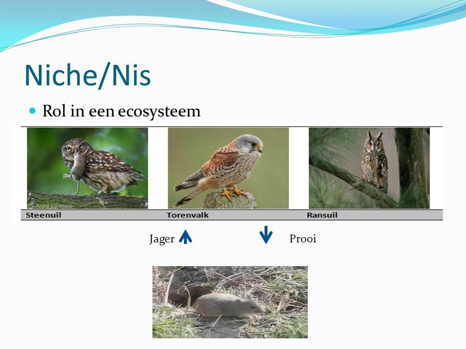 Niche/Nis Rol in een ecosysteem JagerProoi