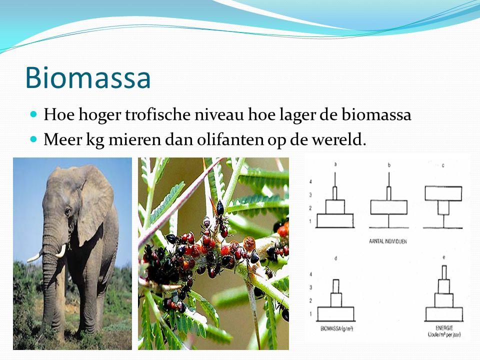 Biomassa Hoe hoger trofische niveau hoe lager de biomassa Meer kg mieren dan olifanten op de wereld.