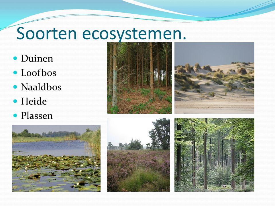 Soorten ecosystemen. Duinen Loofbos Naaldbos Heide Plassen