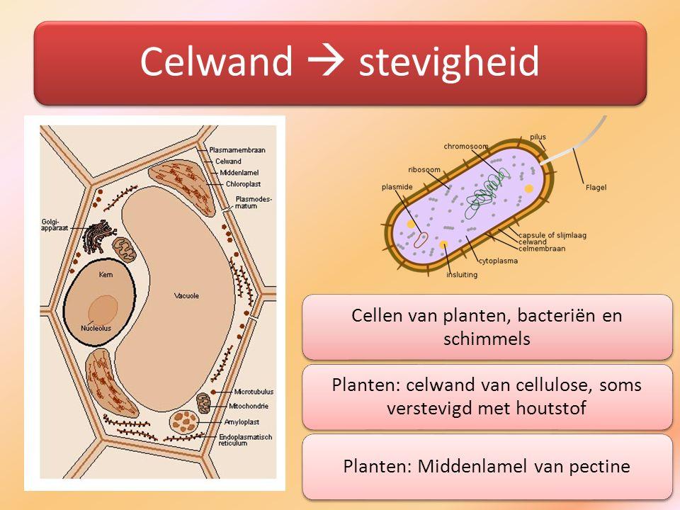 Celwand  stevigheid Cellen van planten, bacteriën en schimmels Planten: celwand van cellulose, soms verstevigd met houtstof Planten: Middenlamel van
