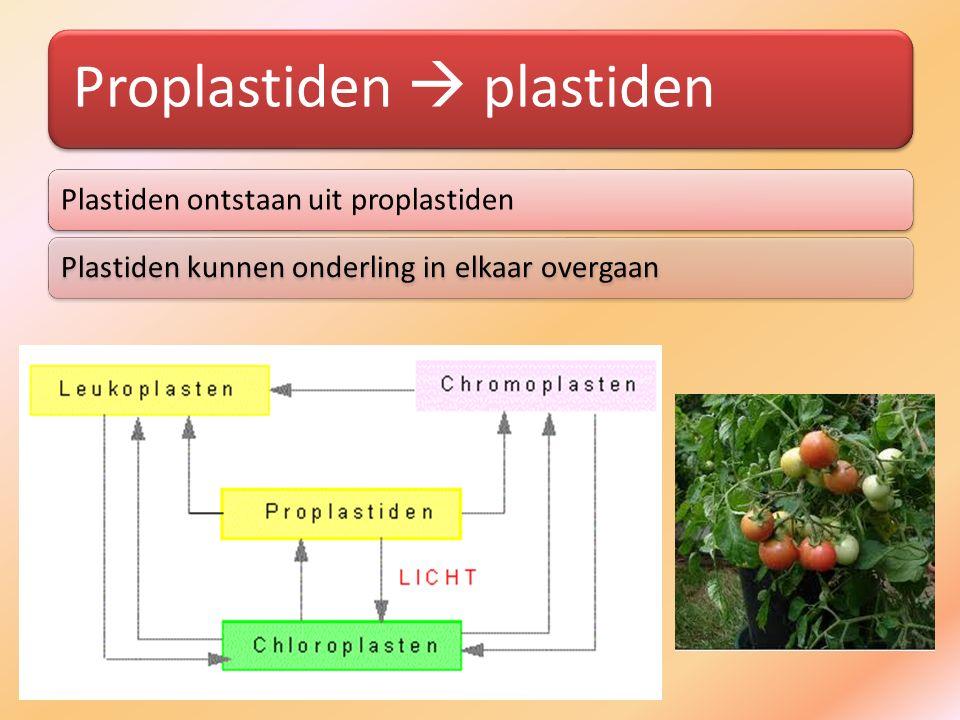 Proplastiden  plastiden Plastiden ontstaan uit proplastidenPlastiden kunnen onderling in elkaar overgaan