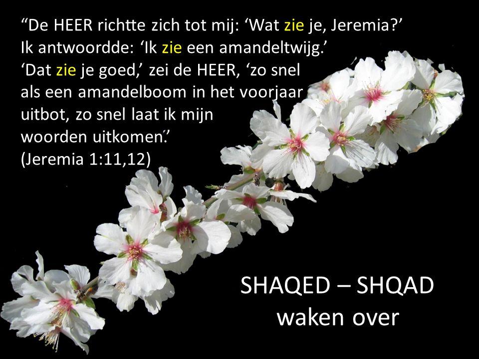 De HEER richtte zich tot mij: 'Wat zie je, Jeremia ' Ik antwoordde: 'Ik zie een amandeltwijg.' 'Dat zie je goed,' zei de HEER, 'zo snel als een amandelboom in het voorjaar uitbot, zo snel laat ik mijn woorden uitkomen.' (Jeremia 1:11,12) SHAQED – SHQAD waken over