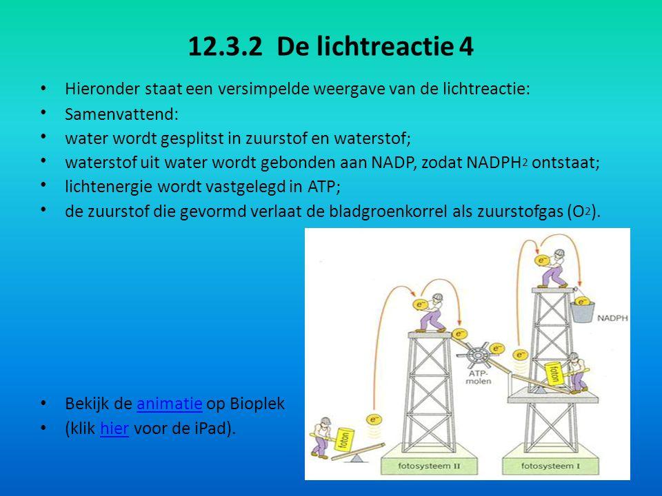 12.3.3 De donkerreactie 1 De donkerreactie bestaat uit processen, die niet direct van licht afhankelijk zijn.