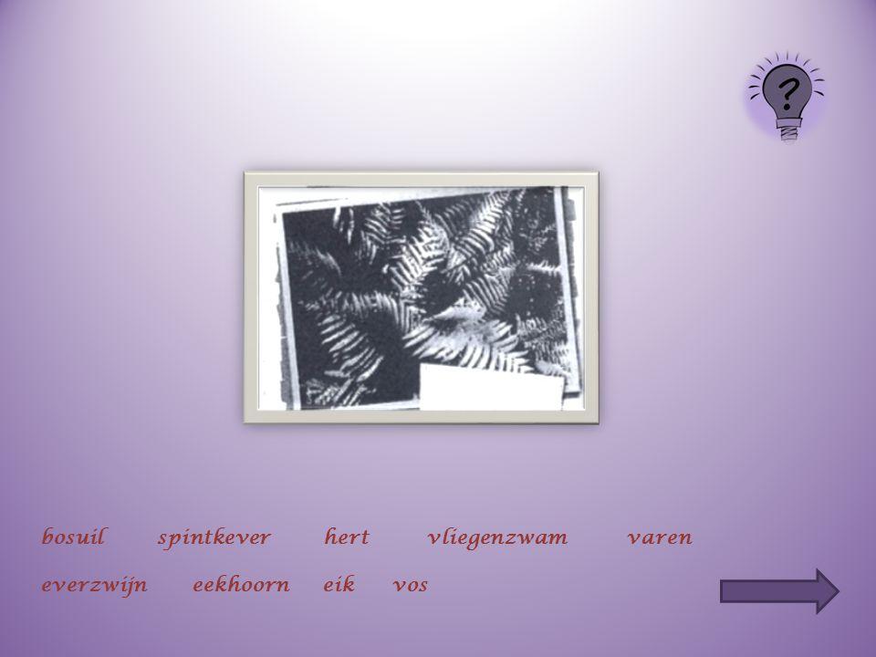 bosuilspintkeverhertvliegenzwamvaren everzwijneekhoorneikvos
