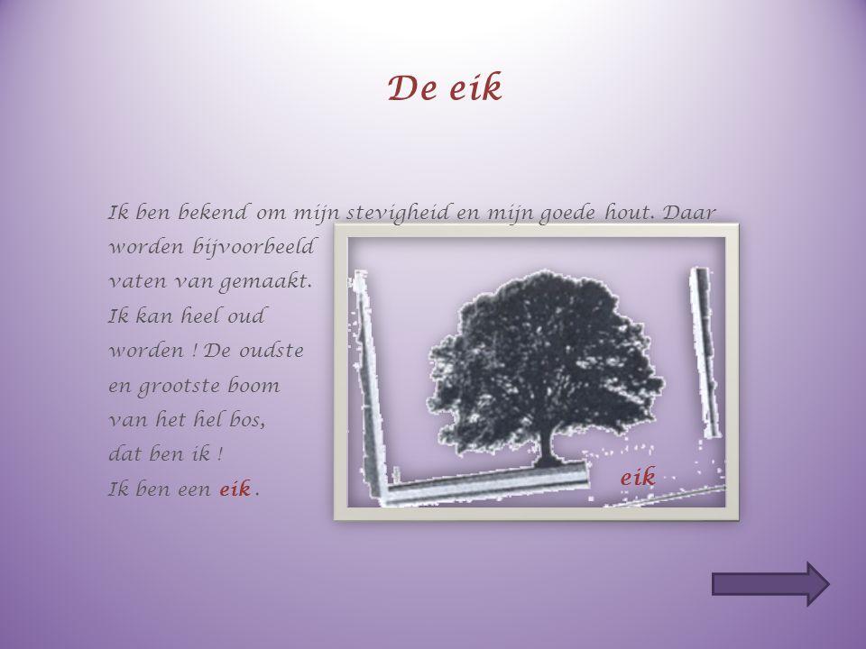 Ik ben heel klein, maar kan grote schade aanrichten… Ik zoek oude en zieke bomen op. Ik leg mijn eitjes onder hun schors en mijn larven eten het hout