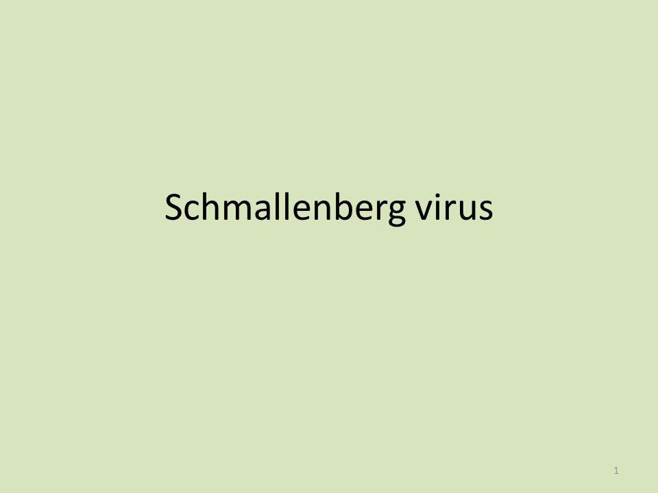 Schmallenberg virus 1