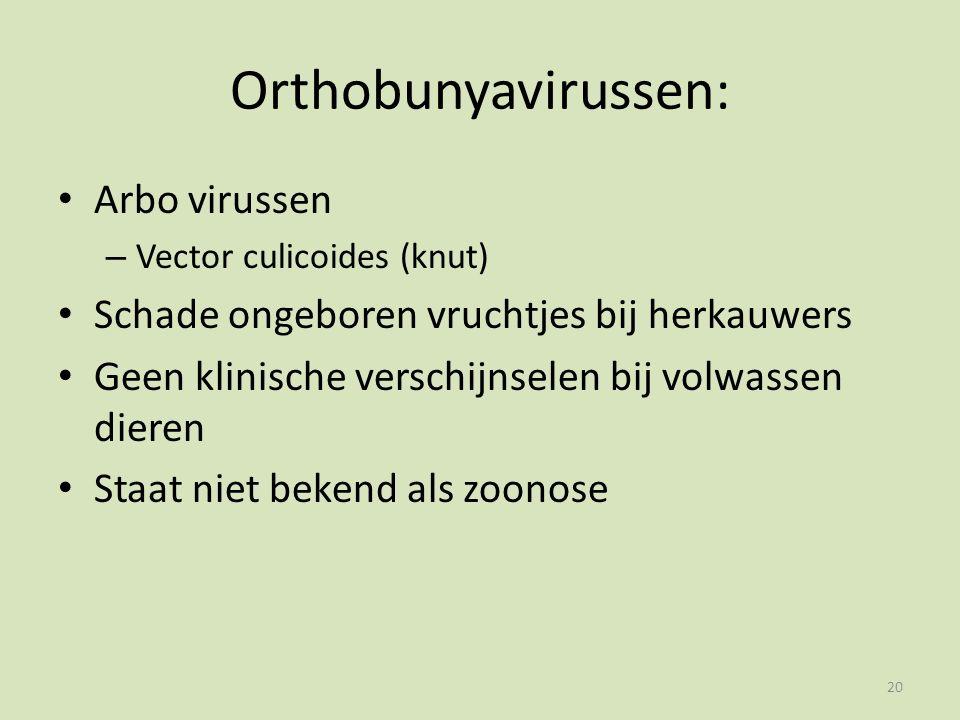 Orthobunyavirussen: Arbo virussen – Vector culicoides (knut) Schade ongeboren vruchtjes bij herkauwers Geen klinische verschijnselen bij volwassen dieren Staat niet bekend als zoonose 20