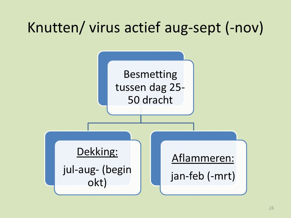 Knutten/ virus actief aug-sept (-nov) Besmetting tussen dag 25- 50 dracht Dekking: jul-aug- (begin okt) Aflammeren: jan-feb (-mrt) 28