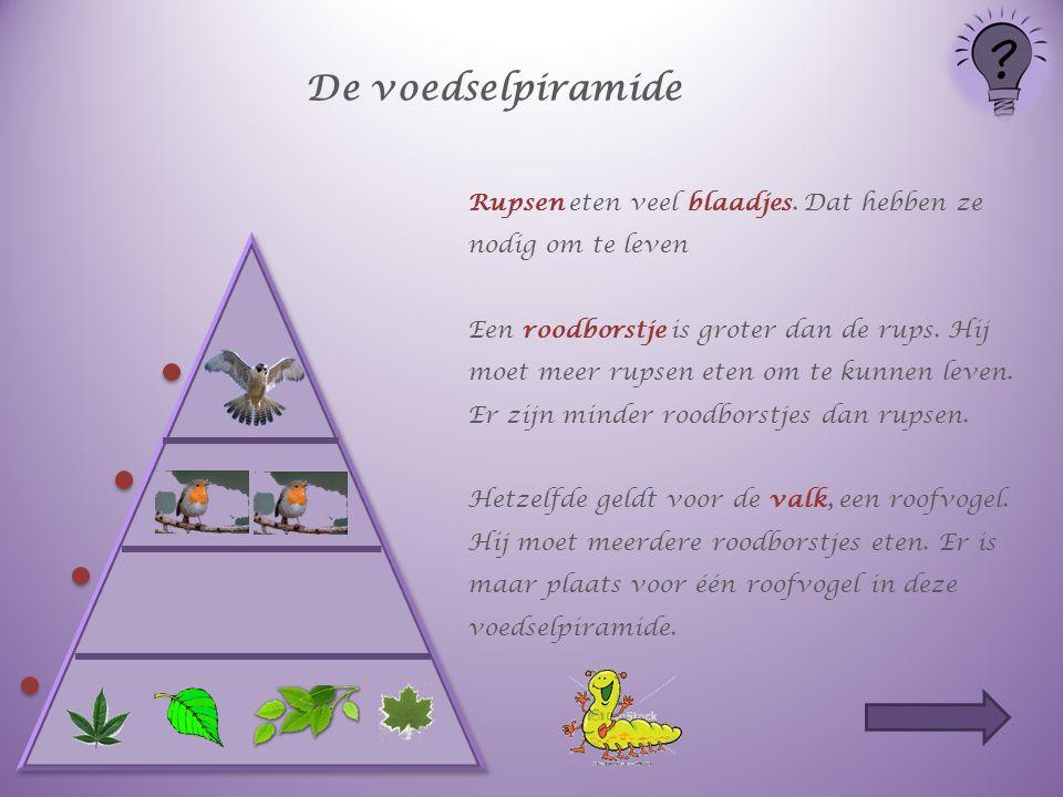 De voedselpiramide Rupsen eten veel blaadjes.