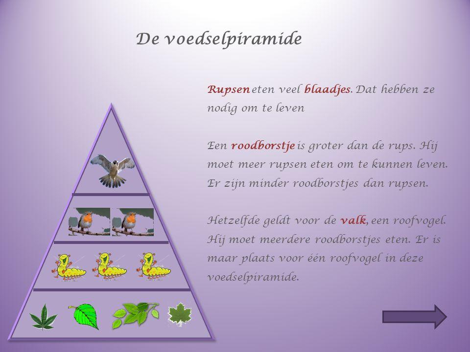 De voedselketen Lees de tekst op de volgende dia aandachtig. Plaats wat in de zinnen staat op de goede plaats in de voedselpiramide.
