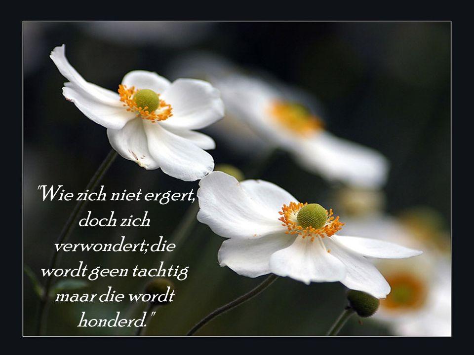 Maak van je gedachten een tuin vol bloemen.
