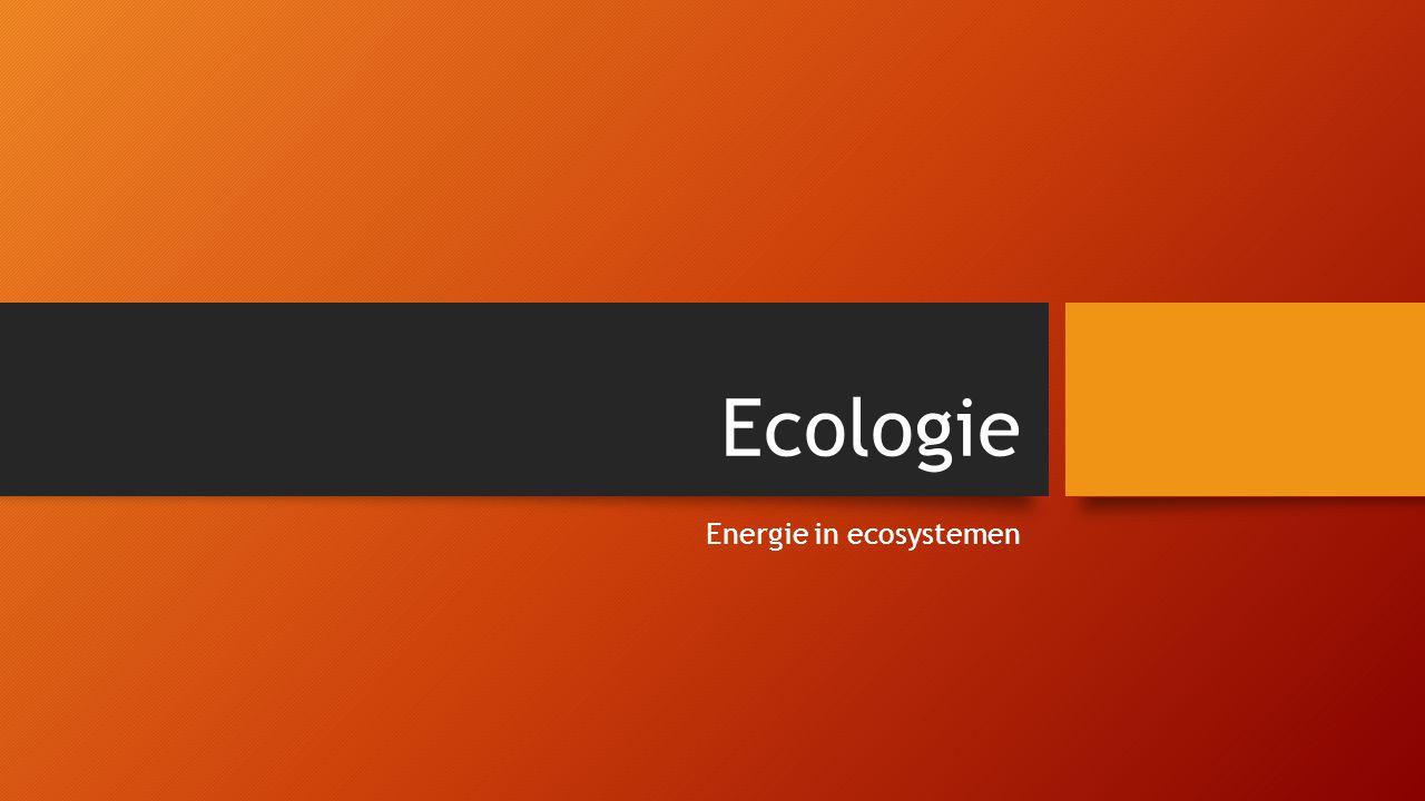 Ecologie Energie in ecosystemen