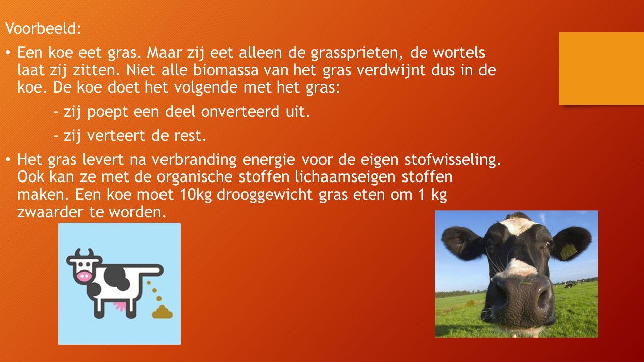 Voorbeeld: Een koe eet gras. Maar zij eet alleen de grassprieten, de wortels laat zij zitten. Niet alle biomassa van het gras verdwijnt dus in de koe.