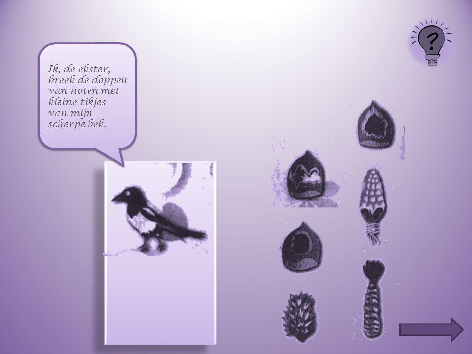 Ik ben een woelmuis. Net als de bosmuis knaag ik aan de noten met mijn knaagtanden. Maar ik maak grotere gaten !