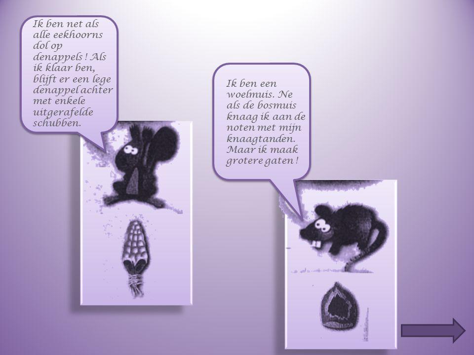 Plaats, op de hierna volgende dia's, het juiste dier bij de juiste pootafdruk.