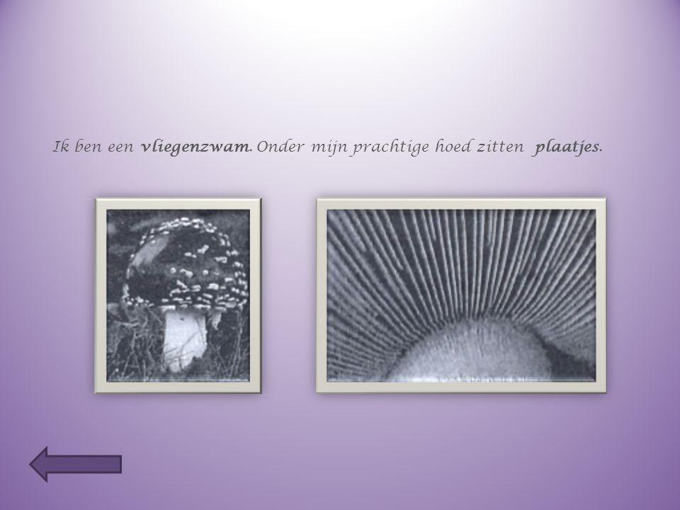Welke paddenstoel heeft welke sporen ? Ik ben een boleet. Onder mijn hoed zitten buisjes