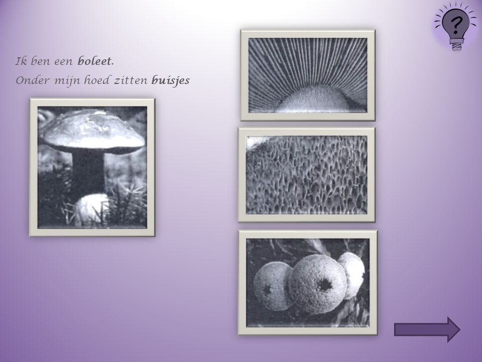 Welke paddenstoel heeft welke sporen ? Klik op de volgende dia's op de juiste sporen