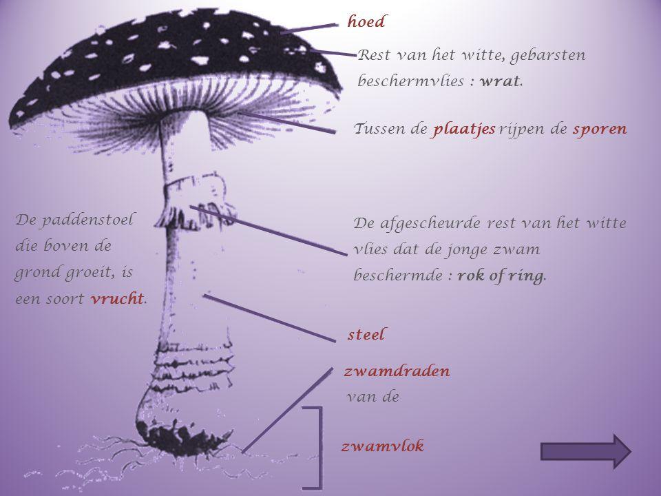 Vul de delen van de paddenstoel aan. Op de volgende dia zie je een vliegenzwam met de delen van een paddenstoel. Benoem de delen.