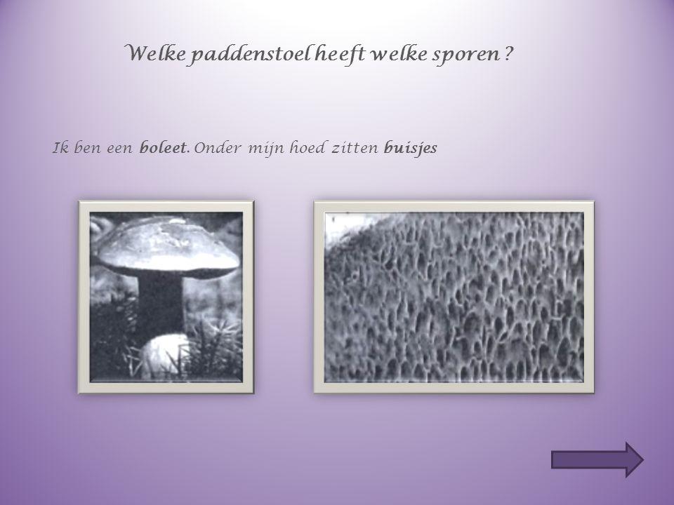 Hoe plant een paddenstoel zich voort ? Vul in. In de hoed van de paddenstoel zitten sporen (=zaadjes). De sporen worden verspreid. Zo kunnen nieuwe pa