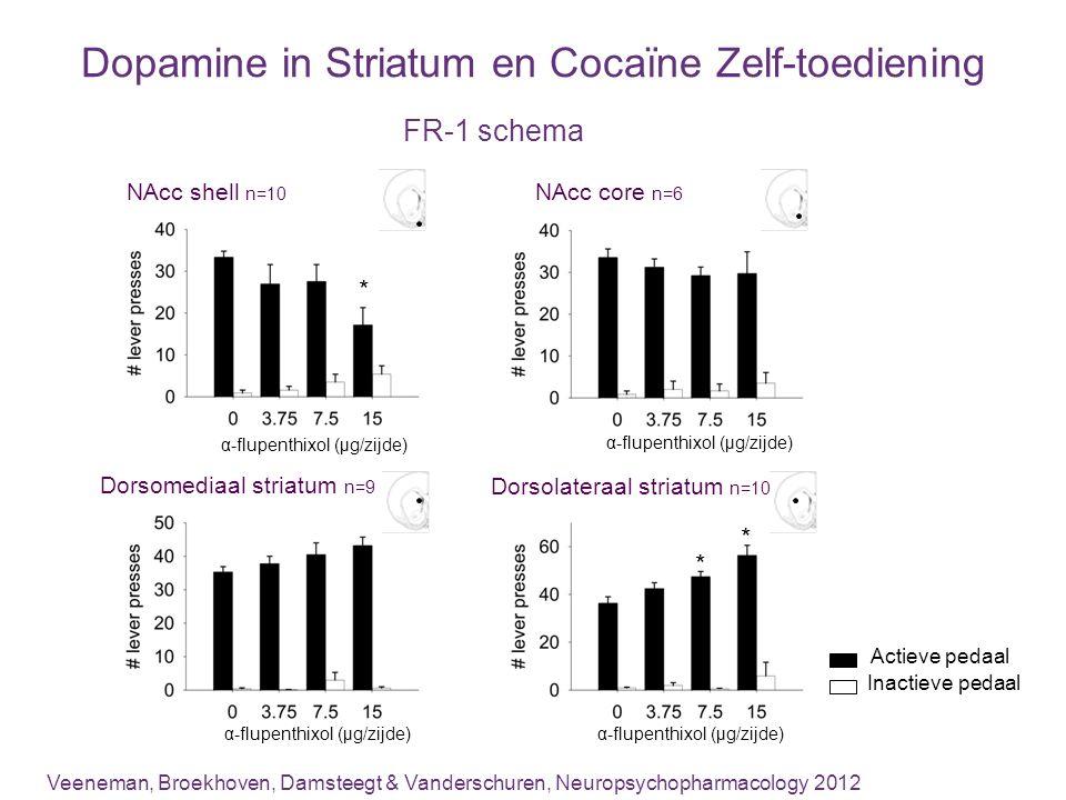 Dopamine in Striatum en Cocaïne Zelf-toediening Actieve pedaal Inactieve pedaal Dorsomediaal striatum n=9 α-flupenthixol (µg/zijde) * * Dorsolateraal