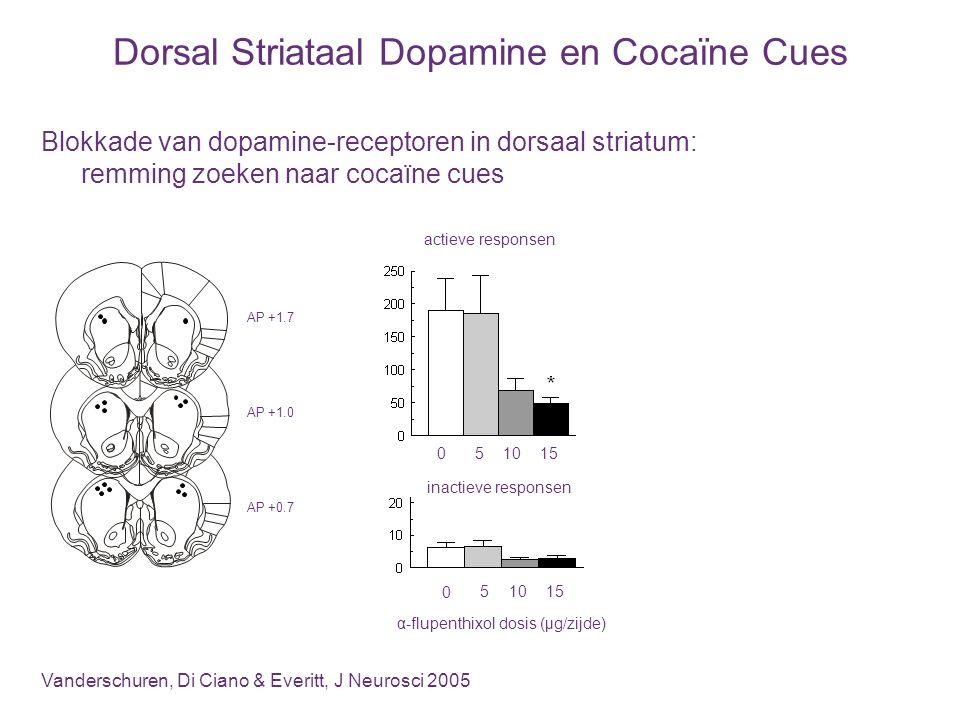 Dorsal Striataal Dopamine en Cocaïne Cues Blokkade van dopamine-receptoren in dorsaal striatum: remming zoeken naar cocaïne cues Vanderschuren, Di Cia