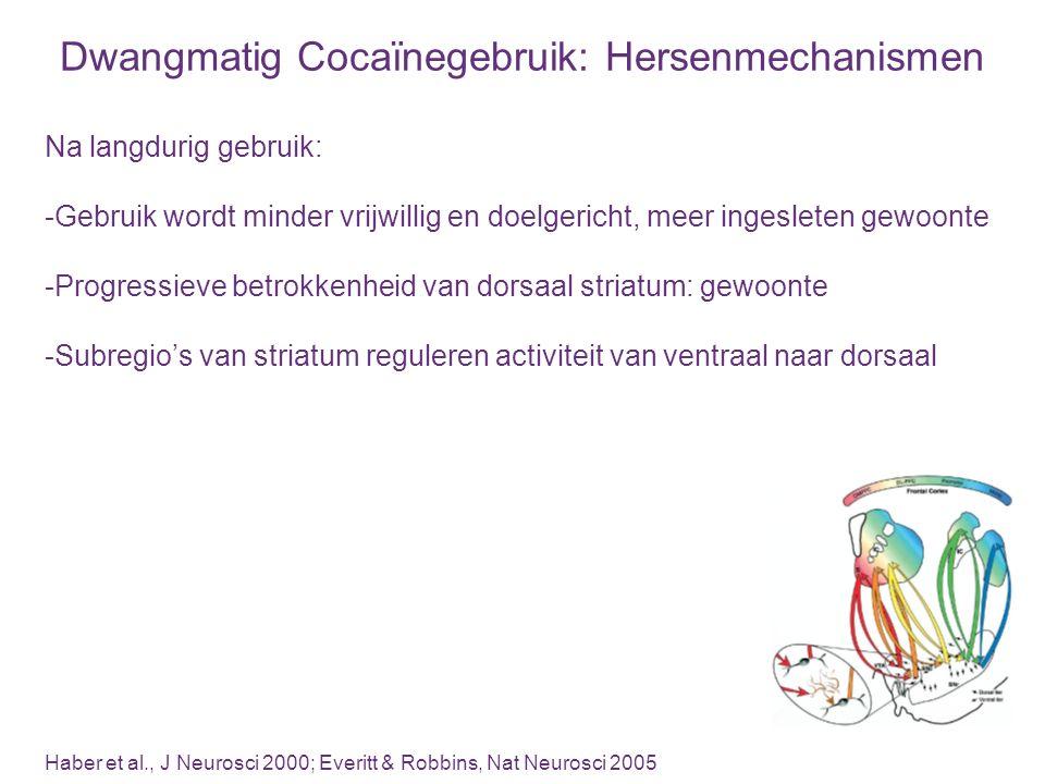 Dorsaal Striatum en Cocaïneverslaving Belonende effecten: dopamine in nucleus accumbens (Roberts et al., 1977, -1980; Pettit et al., 1984; Maldonado et al., 1993; McGregor & Roberts, 1993; Caine & Koob, 1994; Caine et al., 1995; Carlezon & Wise, 1995; Gerrits and van Ree, 1996; Chevrette et al., 2002; Rodd-Henricks et al., 2002; Ikemoto, 2003; Bachtell et al., 2005; Bari and Pierce, 2005; Suto et al., 2009; Suto & Wise, 2011; Veeneman et al., 2012) Gedragseffecten van cues: dopamine in dorsaal striatum, niet ventraal (Neisewander et al., 1996; Ito et al., 2000; -2002; Di Ciano and Everitt, 2004; Vanderschuren et al., 2005; Belin & Everitt, 2008; Murray et al., 2012) Craving door cues: dopamine in dorsaal striatum (Volkow et al., 2006; Wong et al., 2006) Dorsolateraal striatum: gewoonte en dwangmatig cocaïnegebruik (Zapata et al., 2010; Jonkman et al., 2012) Adaptaties in dopamine activiteit breiden uit van ventraal naar dorsaal na langdurig cocaïnegebruik (Letchworth et al., 2001; Porrino et al., 2004)