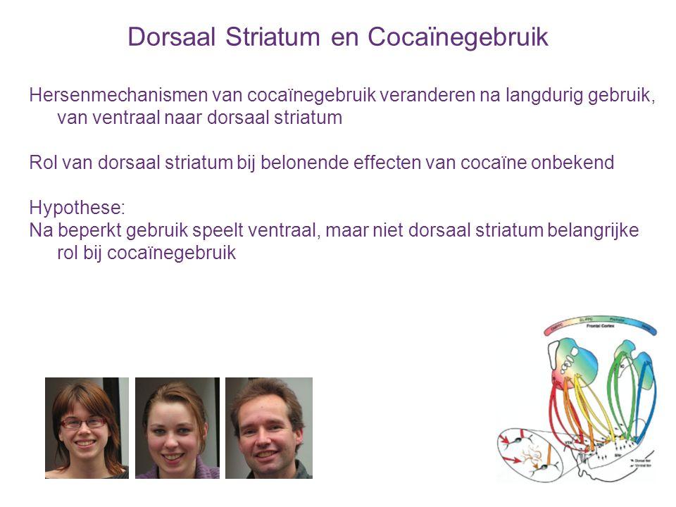 Dorsaal Striatum en Cocaïnegebruik Hersenmechanismen van cocaïnegebruik veranderen na langdurig gebruik, van ventraal naar dorsaal striatum Rol van do