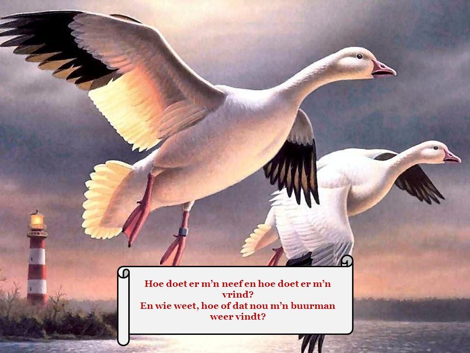 Het leven is heerlijk, het leven is mooi Maar - vlieg uit in de lucht en kruip niet in een kooi Mens, durf te leven..