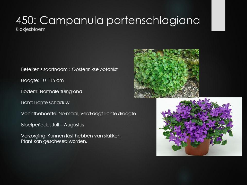 450: Campanula portenschlagiana Klokjesbloem Betekenis soortnaam : Oostenrijkse botanist Hoogte: 10 - 15 cm Bodem: Normale tuingrond Licht: Lichte sch
