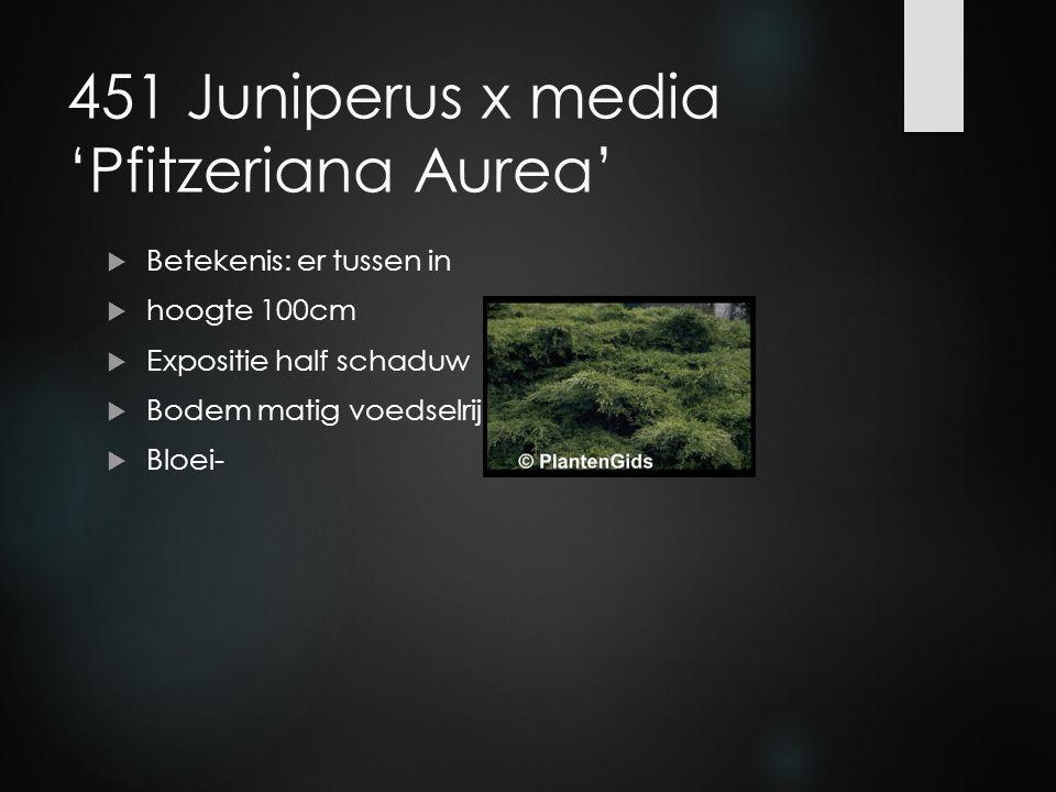 451 Juniperus x media 'Pfitzeriana Aurea'  Betekenis: er tussen in  hoogte 100cm  Expositie half schaduw  Bodem matig voedselrijk  Bloei-
