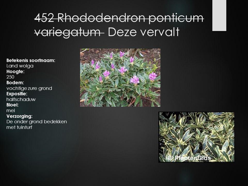 452 Rhododendron ponticum variegatum Deze vervalt Betekenis soortnaam: Land wolga Hoogte: 250 Bodem: vochtige zure grond Expositie: halfschaduw Bloei: